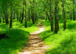 path in green forest purchased medium