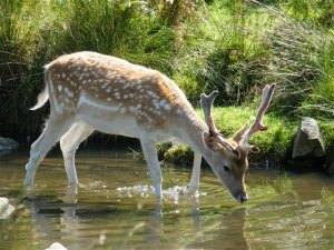 """""""As the deer longs for the water, so my soul longs for you, O Lord."""""""